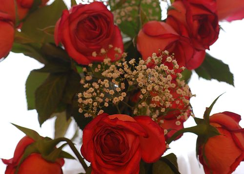 Indoor Red Roses