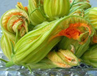 Male Zucchini Blossom