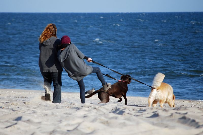 Who's Walking Whom - Dog Walking on the Beach ©2010 Claudia Ward