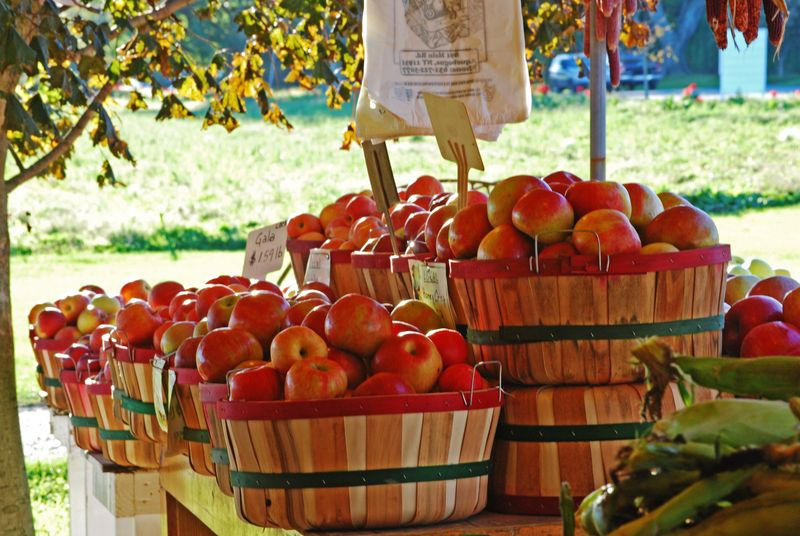 Apples at a Farm Stand © 2010 Claudia Ward