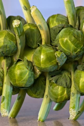 A Chorus Line of Brussels Sprouts © 2010 Claudia Ward