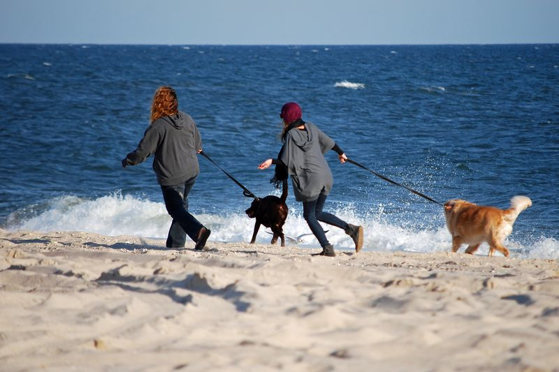 Dog Walking on the Beach ©2010 Claudia Ward