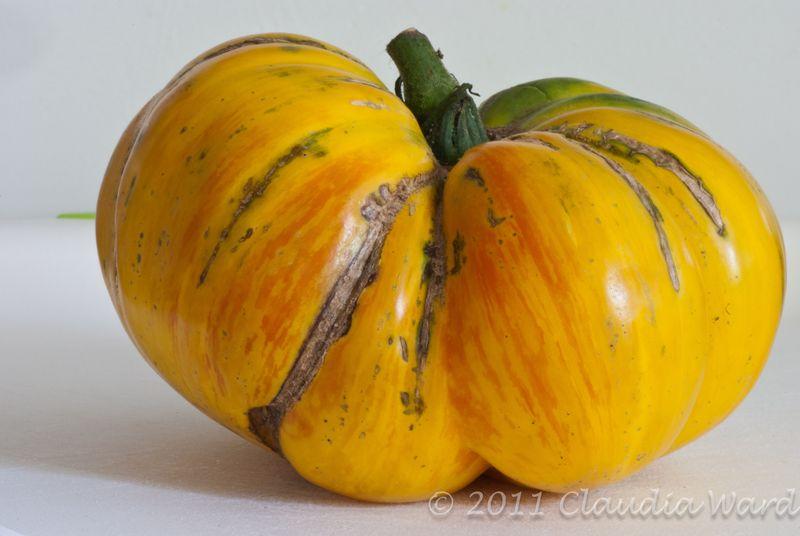 Yello Heirloom Tomato © Claudia Ward