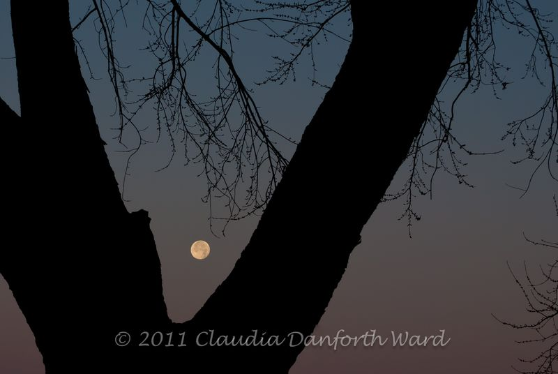 Setting_Moon_20111211_070701