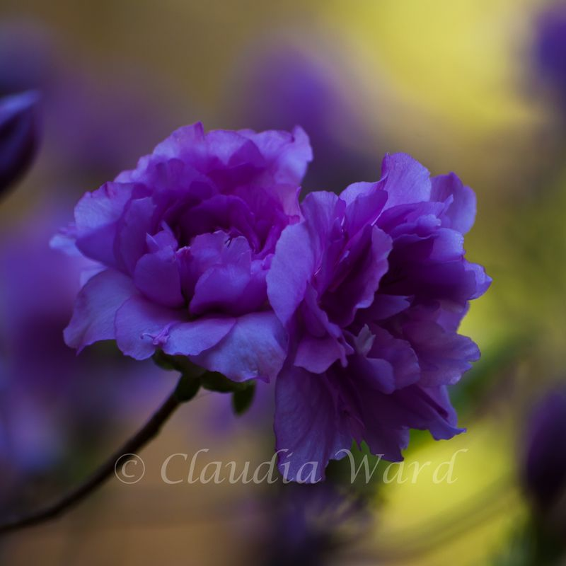 Purple_Flower_20090424_140359