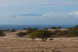 Ranch Land on Northwest Hawaii