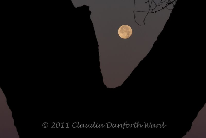 Setting_Moon_20111211_070625-2