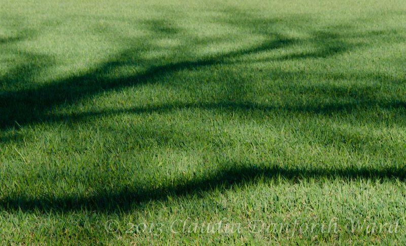 Greener Grass © 2013 Claudia Ward