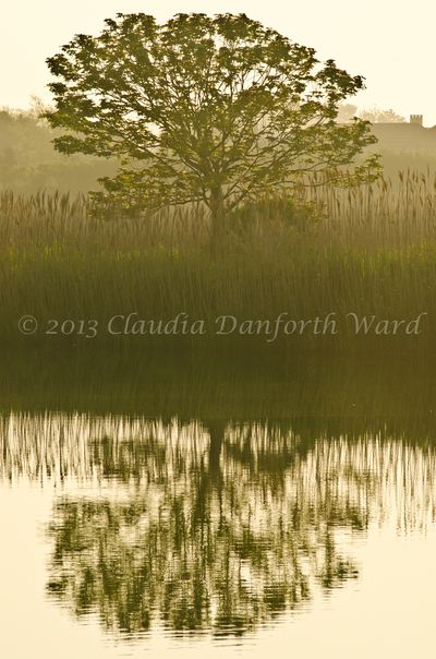 Early Morning Reflections © 2013 Claudia Ward