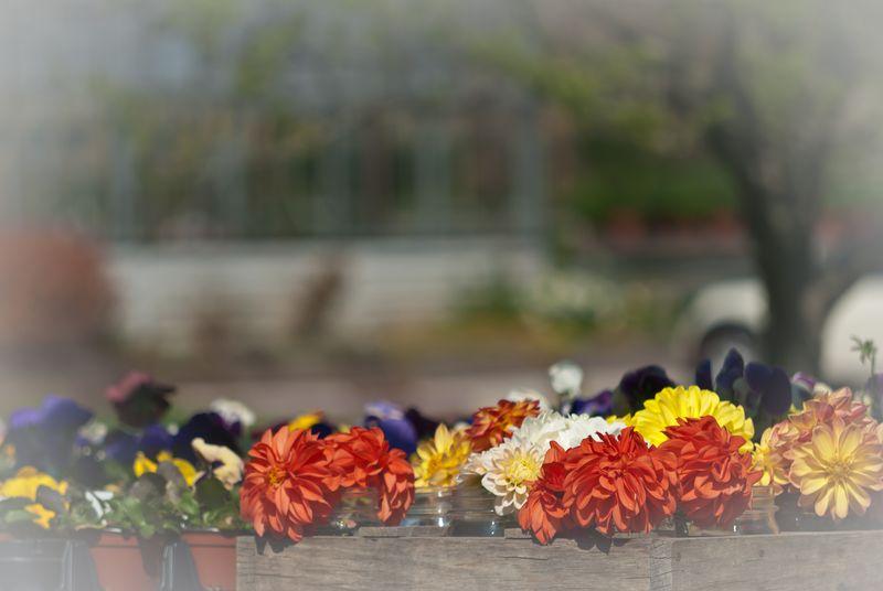Flowers in a Fog © 2009 Claudia Ward