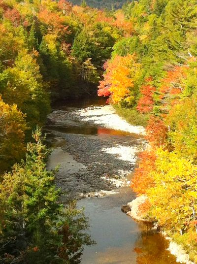Fall on the Cabot Trail ©2013 Claudia Ward