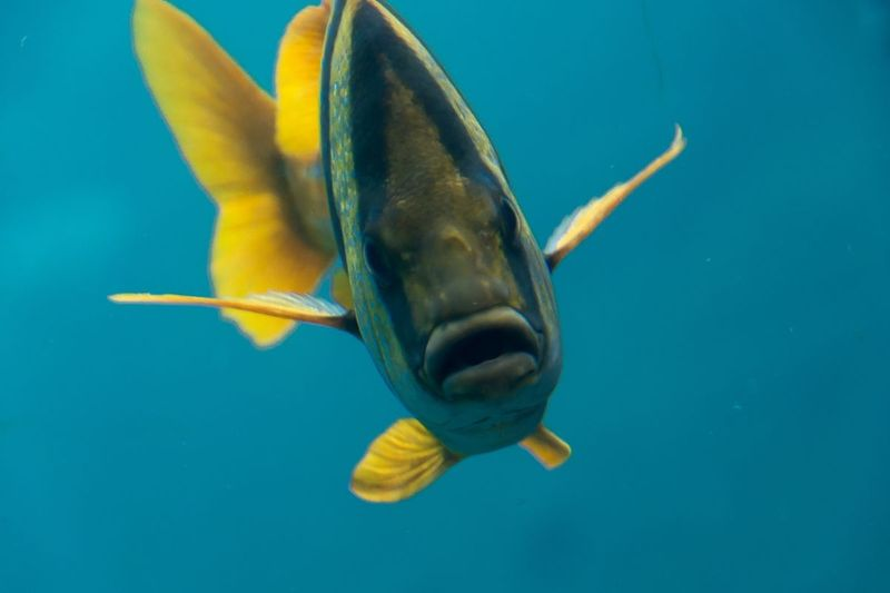 Atlantis_FIsh