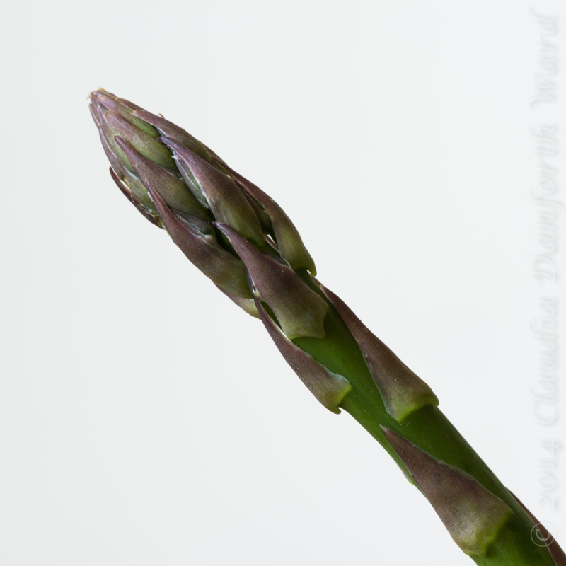 Fresh Asparagus Spear © 2014 Claudia Ward