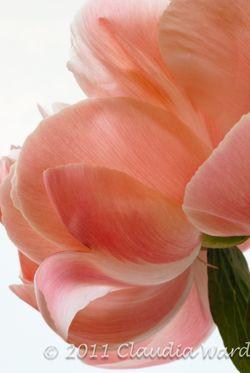 B&W_Flowers_2011_20110523-092400_DSC_0431-2