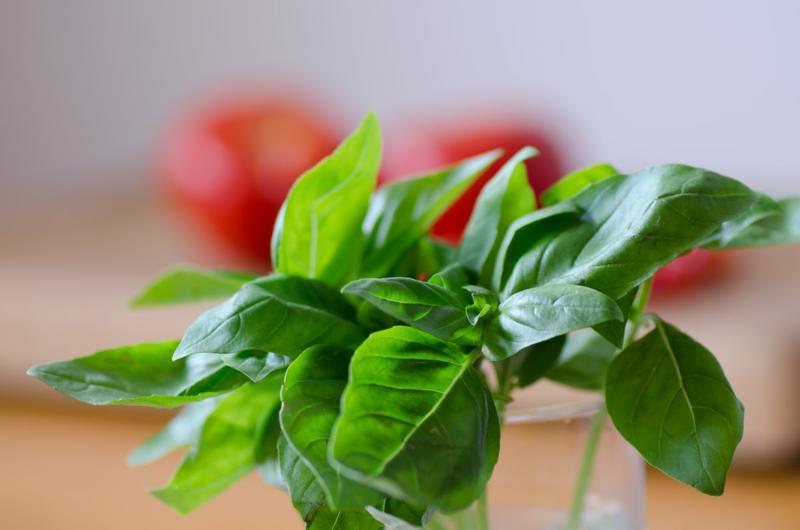 Basil & Tomatoes © 2014 Claudia Ward