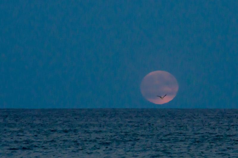 Super Moon Rising Oct 2016 © Claudia Ward