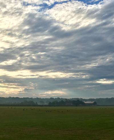 Foggy Field in Bridgehampton © 2017 Claudia Ward