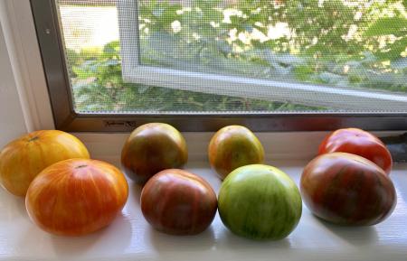 Babinski's Heirloom Tomatoes © 2019 Claudia Ward