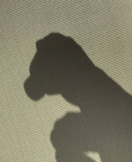 Shadow Puppet The Patient Pup