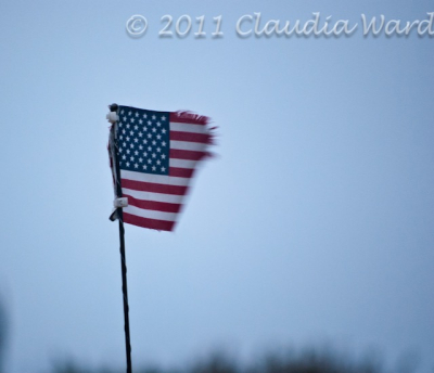 American Flag Tattered (1)